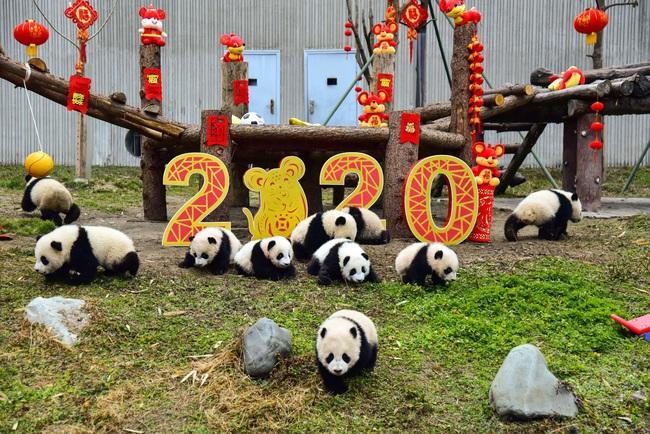 Hàng triệu người trên thế giới chào đón Tết Nguyên Đán Canh Tý 2020: Trung Quốc có một dịp Tết khác lạ, Việt Nam lung linh trên báo nước ngoài - Ảnh 7.