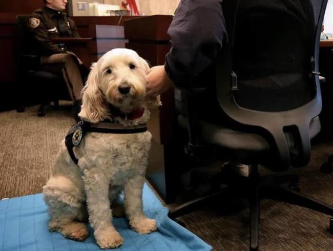 """Chùm ảnh đáng yêu: 15 chú chó xứng đáng được nhận giải thưởng """"nhân viên của tháng""""! - Ảnh 7."""