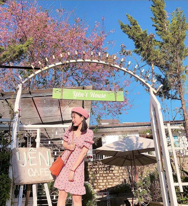 Mùa hoa mai anh đào lại hồng rợp Đà Lạt, hội chị em chen nhau chụp ảnh check in xinh lung linh như ở Hàn - Ảnh 16.