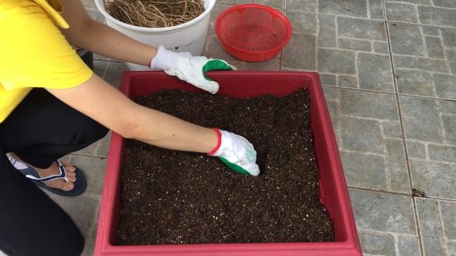 Giám đốc ra đề trong cuộc thi chọn kế toán trưởng: Hãy trồng một chậu hoa và miêu tả chúng cùng kết quả bất ngờ dành cho ứng viên đã gieo loại hạt này - Ảnh 6.