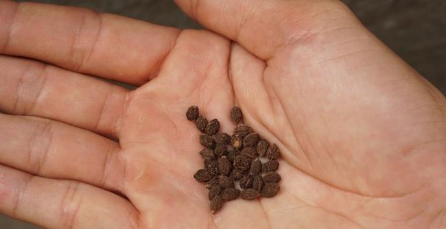 Giám đốc ra đề trong cuộc thi chọn kế toán trưởng: Hãy trồng một chậu hoa và miêu tả chúng cùng kết quả bất ngờ dành cho ứng viên đã gieo loại hạt này - Ảnh 1.