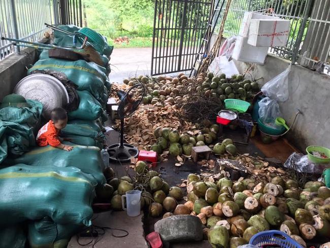 Cận Tết, bà nội trợ Việt nhà nhà mua cùi dừa non 70 ngàn đồng/kg làm mứt, tiểu thương ngày bán cả tạ  - Ảnh 11.