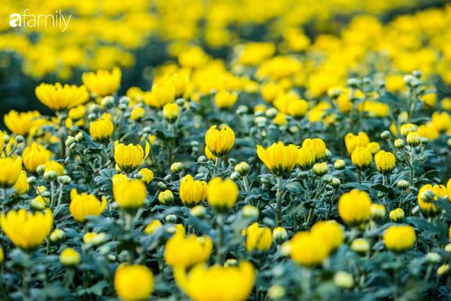 Hoa bung nở trước Tết, người dân Tây Tựu thấp thỏm lo không có Tết - Ảnh 3.