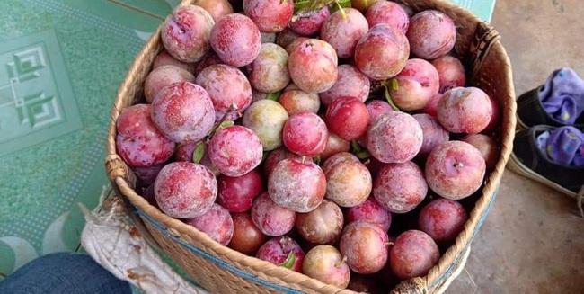 Loạn giá mận Mộc Châu trái mùa bán trên chợ mạng, tiểu thương nhét túi vài triệu/ngày - Ảnh 6.