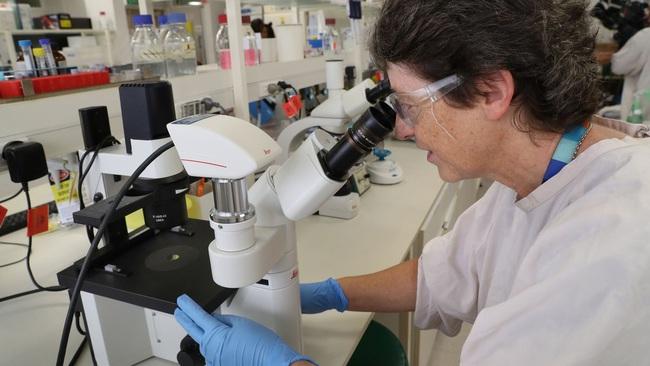 Virus corona mới Covid-19 lây nhiễm siêu nhanh nhưng tỷ lệ tử vong ít hơn SARS và Ebola? - Ảnh 1.