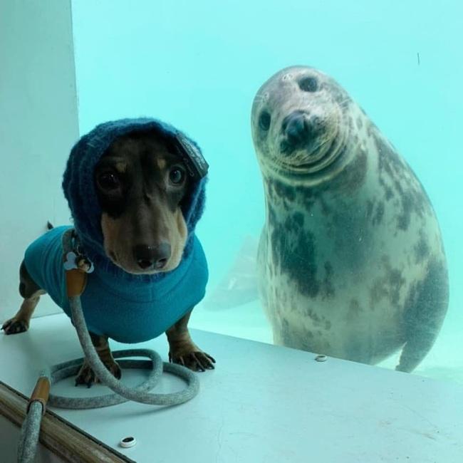 Chó xúc xích và chó biển bất ngờ trở thành bạn thân - Ảnh 1.