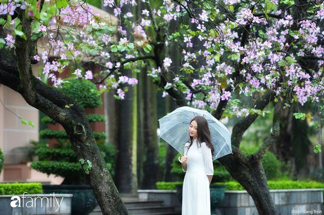 Những ngày ảm đạm vì dịch bệnh và mưa rét, chẳng ai nhận ra hoa ban tím đã lặng lẽ bung nở từ khi nào - Ảnh 1.