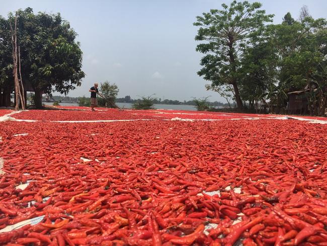 Đồng Tháp tìm đường đi cho nông sản trong mùa dịch - Ảnh 1.