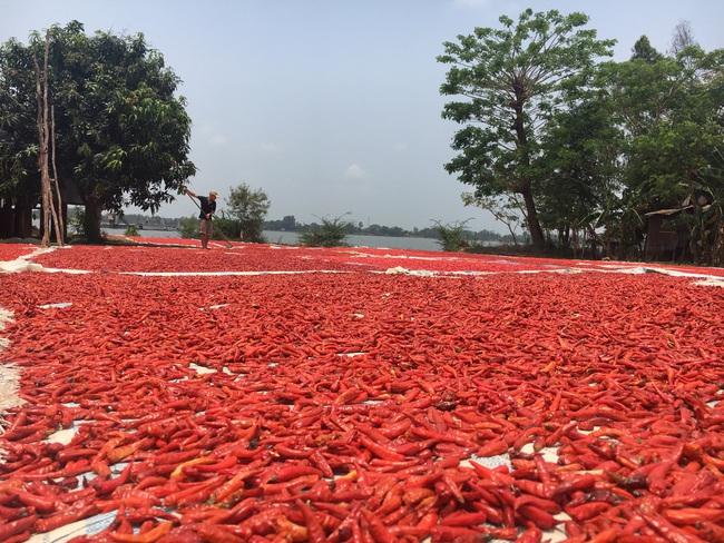 Đồng Tháp tìm đường đi cho nông sản trong mùa dịch - Ảnh 2.