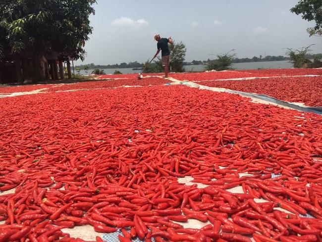 Đồng Tháp tìm đường đi cho nông sản trong mùa dịch - Ảnh 3.