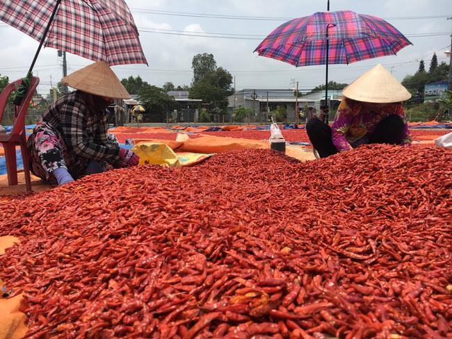 Đồng Tháp tìm đường đi cho nông sản trong mùa dịch - Ảnh 5.