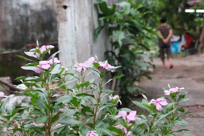 Nỗi hoang mang của người dân tại cù lao sắp bị giải tỏa ở Sài Gòn - Ảnh 16.