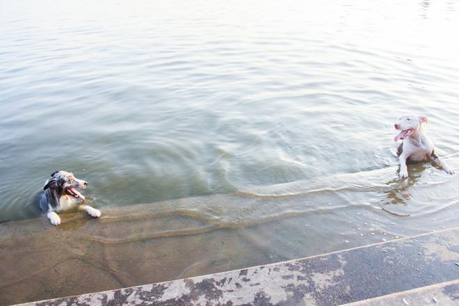 Nắng nóng đỉnh điểm, chủ mặc kín như ninja lội nước, chó cưng vùng vẫy ở Hồ Tây - Ảnh 3.