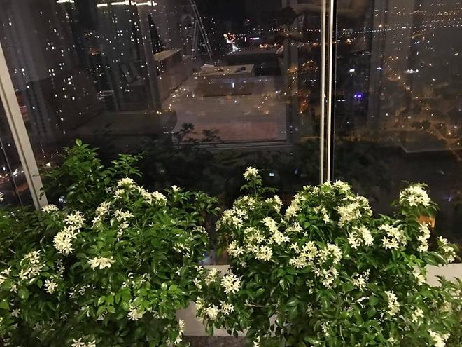 Ban công trên cao rực rỡ sắc hoa và rau sạch của diễn viên Thân Thúy Hà - Ảnh 13.