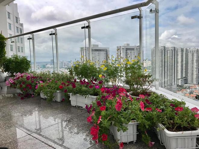 Ban công trên cao rực rỡ sắc hoa và rau sạch của diễn viên Thân Thúy Hà - Ảnh 5.