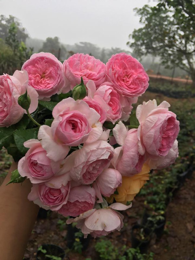 Khu vườn hoa hồng 2000 gốc gây thương nhớ cho bất cứ ai của chàng trai 9x ở Đồng Nai - Ảnh 32.