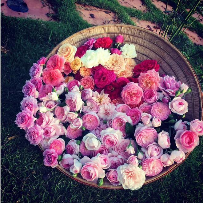 Khu vườn hoa hồng 2000 gốc gây thương nhớ cho bất cứ ai của chàng trai 9x ở Đồng Nai - Ảnh 8.
