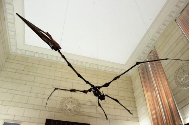 Thì ra Trái đất từng có loài 'sát thủ trên không' to như chiếc máy bay và ăn thịt cả khủng long