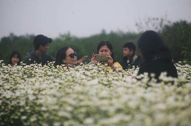 Hà Nội: Bất chấp trời lạnh, nhiều người vẫn ùn ùn kéo đến thả dáng với cúc họa mi - Ảnh 3.