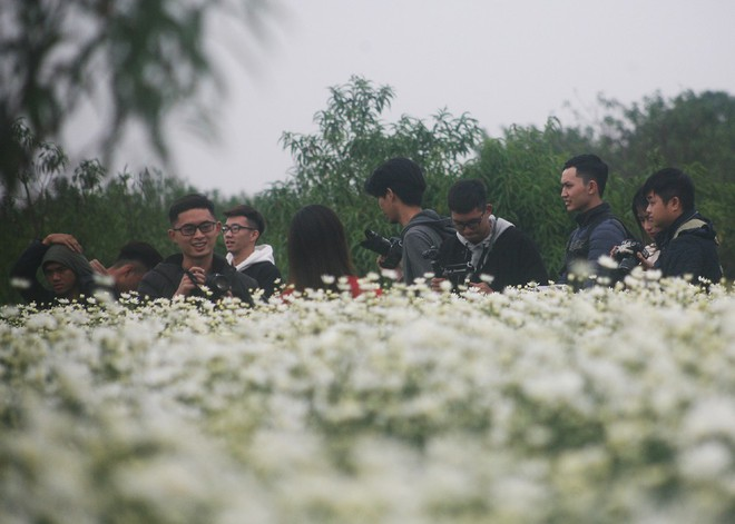 Hà Nội: Bất chấp trời lạnh, nhiều người vẫn ùn ùn kéo đến thả dáng với cúc họa mi - Ảnh 4.