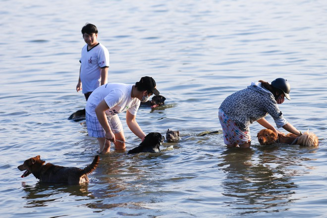 Nắng nóng đỉnh điểm, chủ mặc kín như ninja lội nước, chó cưng vùng vẫy ở Hồ Tây - Ảnh 5.