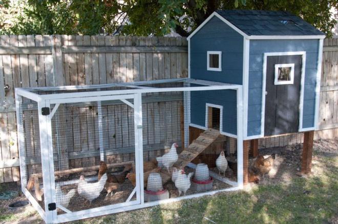 Những ngôi nhà nhỏ xinh đẹp như khách sạn dành cho… gà vịt - Ảnh 13.