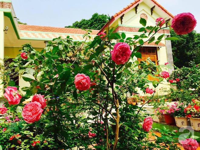Khu vườn rộng gần nghìn m² đầy hoa và rau xanh của cô giáo dạy toán - Ảnh 7.