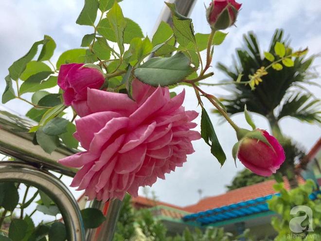 Khu vườn rộng gần nghìn m² đầy hoa và rau xanh của cô giáo dạy toán - Ảnh 14.