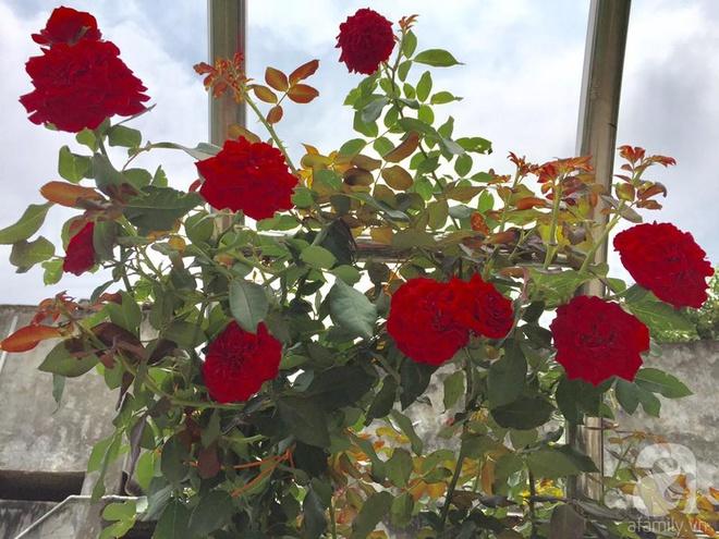 Khu vườn rộng gần nghìn m² đầy hoa và rau xanh của cô giáo dạy toán - Ảnh 16.