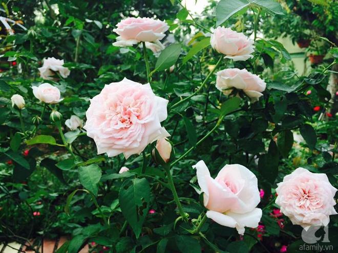 Khu vườn rộng gần nghìn m² đầy hoa và rau xanh của cô giáo dạy toán - Ảnh 20.