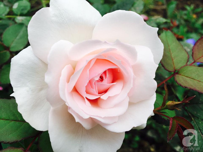 Khu vườn rộng gần nghìn m² đầy hoa và rau xanh của cô giáo dạy toán - Ảnh 24.