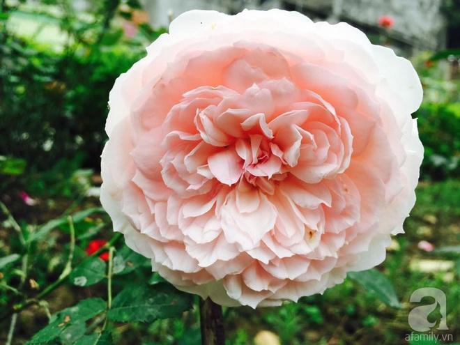 Khu vườn rộng gần nghìn m² đầy hoa và rau xanh của cô giáo dạy toán - Ảnh 25.