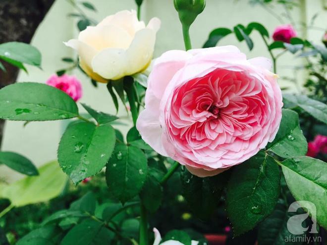 Khu vườn rộng gần nghìn m² đầy hoa và rau xanh của cô giáo dạy toán - Ảnh 26.