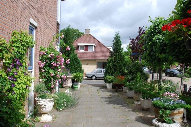 Khu vườn hoa nở suốt bốn mùa đẹp như trong mơ của đạo diễn Nguyễn Hải Anh - Ảnh 2.