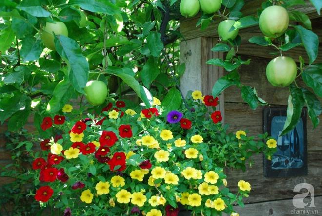 Khu vườn hoa nở suốt bốn mùa đẹp như trong mơ của đạo diễn Nguyễn Hải Anh - Ảnh 6.