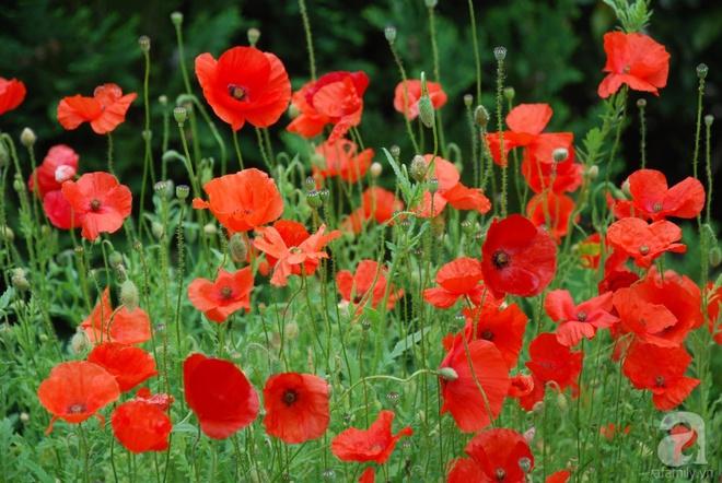 Khu vườn hoa nở suốt bốn mùa đẹp như trong mơ của đạo diễn Nguyễn Hải Anh - Ảnh 7.