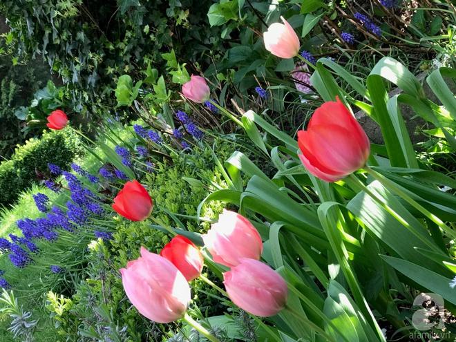 Khu vườn hoa nở suốt bốn mùa đẹp như trong mơ của đạo diễn Nguyễn Hải Anh - Ảnh 9.