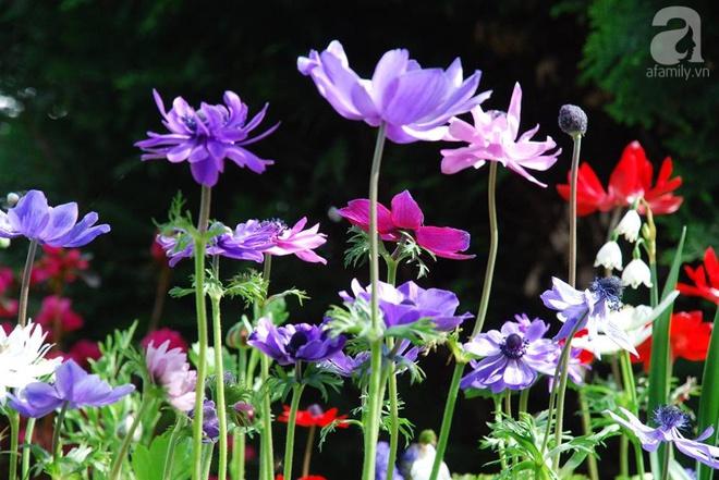 Khu vườn hoa nở suốt bốn mùa đẹp như trong mơ của đạo diễn Nguyễn Hải Anh - Ảnh 14.