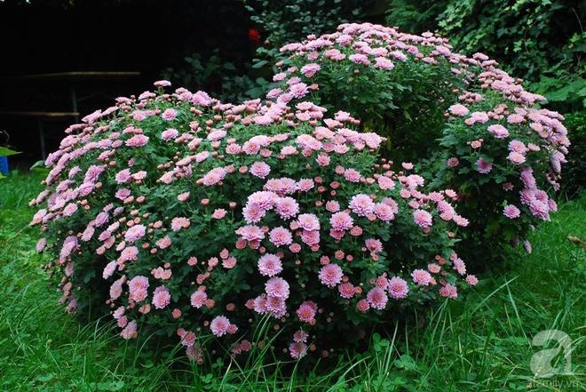 Khu vườn hoa nở suốt bốn mùa đẹp như trong mơ của đạo diễn Nguyễn Hải Anh - Ảnh 15.