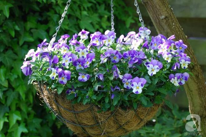 Khu vườn hoa nở suốt bốn mùa đẹp như trong mơ của đạo diễn Nguyễn Hải Anh - Ảnh 16.