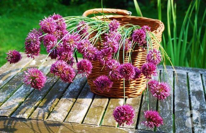 Khu vườn hoa nở suốt bốn mùa đẹp như trong mơ của đạo diễn Nguyễn Hải Anh - Ảnh 17.