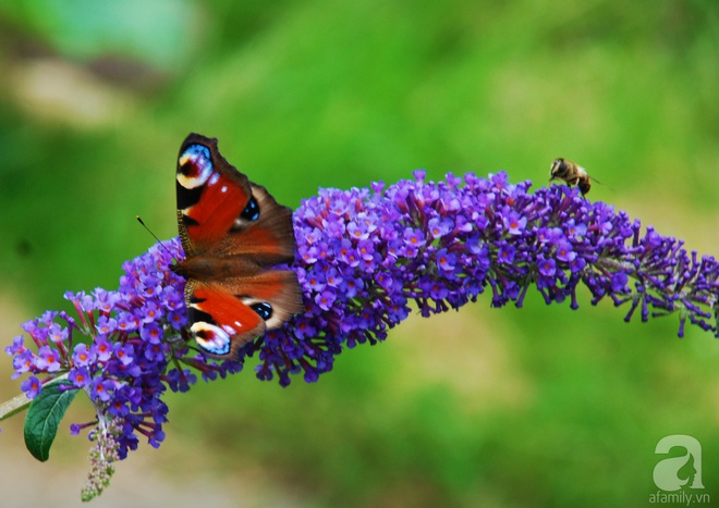 Khu vườn hoa nở suốt bốn mùa đẹp như trong mơ của đạo diễn Nguyễn Hải Anh - Ảnh 18.