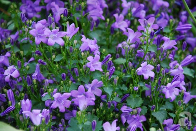 Khu vườn hoa nở suốt bốn mùa đẹp như trong mơ của đạo diễn Nguyễn Hải Anh - Ảnh 19.