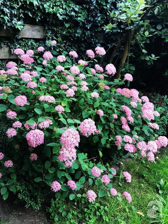 Khu vườn hoa nở suốt bốn mùa đẹp như trong mơ của đạo diễn Nguyễn Hải Anh - Ảnh 22.