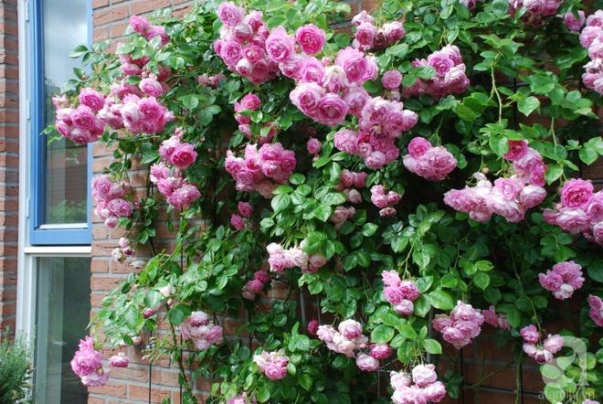 Khu vườn hoa nở suốt bốn mùa đẹp như trong mơ của đạo diễn Nguyễn Hải Anh - Ảnh 23.
