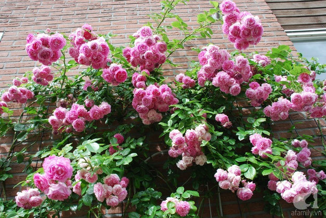 Khu vườn hoa nở suốt bốn mùa đẹp như trong mơ của đạo diễn Nguyễn Hải Anh - Ảnh 24.