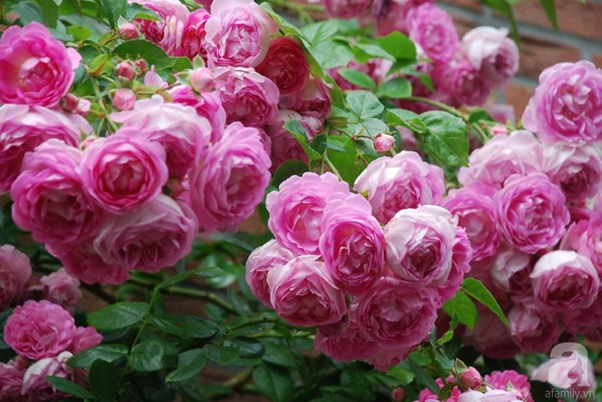 Khu vườn hoa nở suốt bốn mùa đẹp như trong mơ của đạo diễn Nguyễn Hải Anh - Ảnh 25.