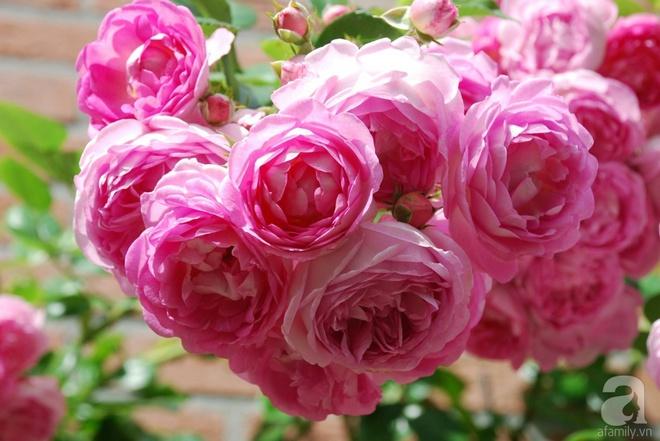 Khu vườn hoa nở suốt bốn mùa đẹp như trong mơ của đạo diễn Nguyễn Hải Anh - Ảnh 26.