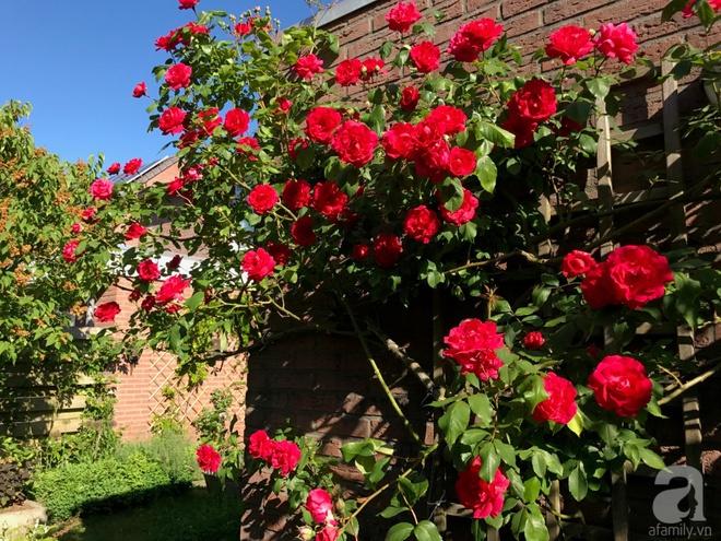 Khu vườn hoa nở suốt bốn mùa đẹp như trong mơ của đạo diễn Nguyễn Hải Anh - Ảnh 28.