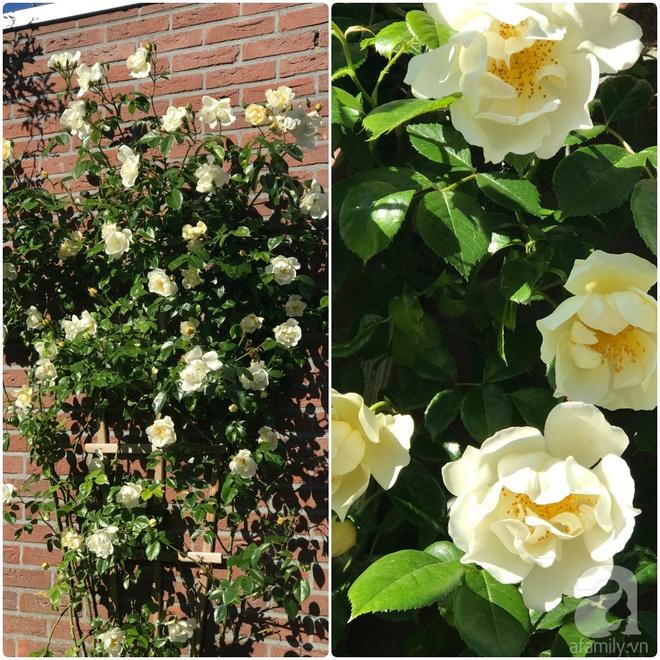 Khu vườn hoa nở suốt bốn mùa đẹp như trong mơ của đạo diễn Nguyễn Hải Anh - Ảnh 29.